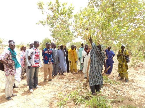 Photo: Sahel Eco & International Tree Foundation: Trees 4 Livelihoods