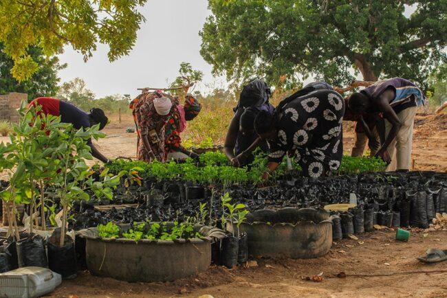 Photo: Women's Initiative Gambia (女性のイニシアティブ・ガンビ)