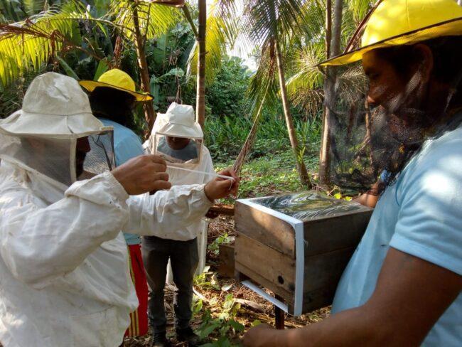 Photo: Meli Bees Network (メリ・ビーズ)