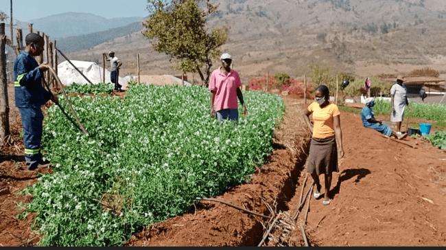 Photo: Chikukwa Research Trust