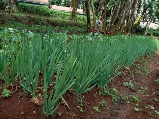 Photo: SCOPE Kenya