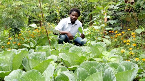 Photo: Organic Technology Extension and Promotion of Initiative Centre (OTEPIC)